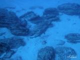 7勝浦ダイビングイソムラボート (6)