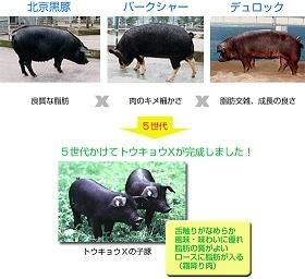 tokyo-111X.jpg