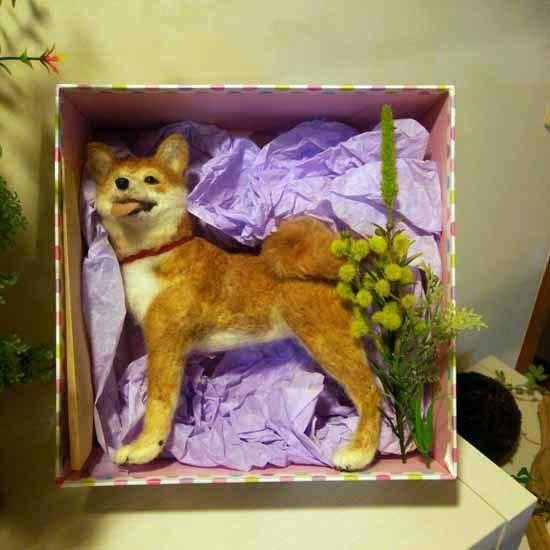 柴犬20170206-4
