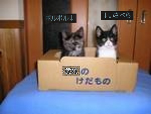 愛媛のミカン箱