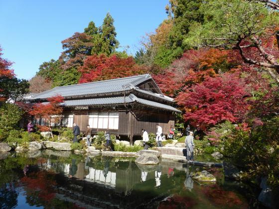 池をぐるりと囲むように散策路が整備されている百済寺の庭園