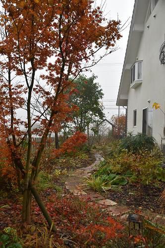 161120朝靄の庭 (3)