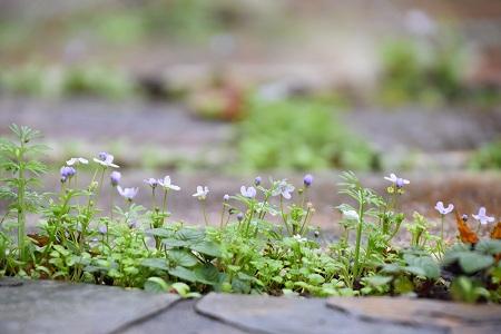 161120朝靄の庭 (13)