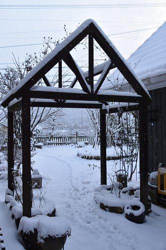 170115雪の朝 (4)