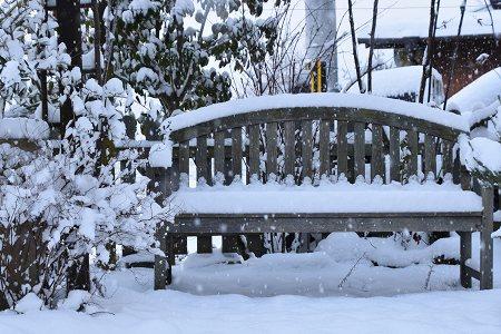 170115雪の朝 (5)