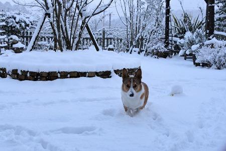 170115雪の朝 (8)