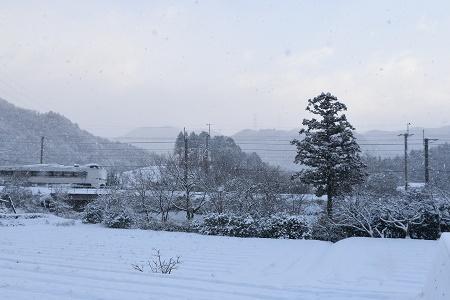 170115雪の朝 (11)