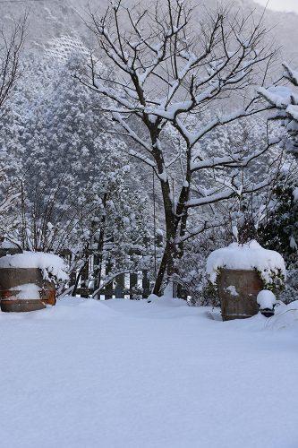 170115雪の朝 (12)