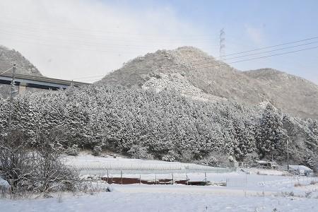 170115雪の朝 (14)