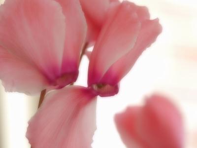 170128室内花 (1)