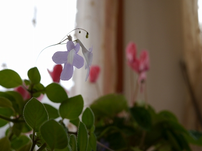 170128室内花 (3)