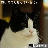 dai20161117_banner.jpg