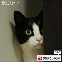 dai20161122_banner.jpg
