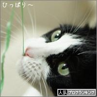 dai20161125_banner.jpg