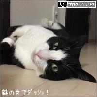 dai20161206_banner.jpg