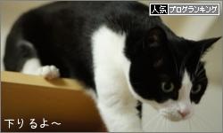 dai20161221_banner.jpg