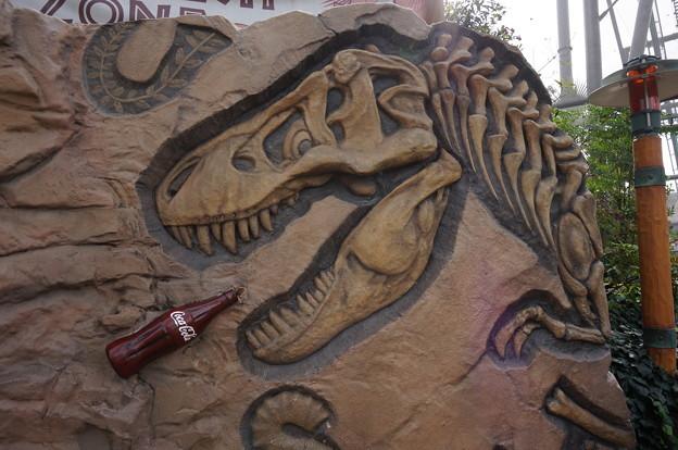 自動販売機横に化石