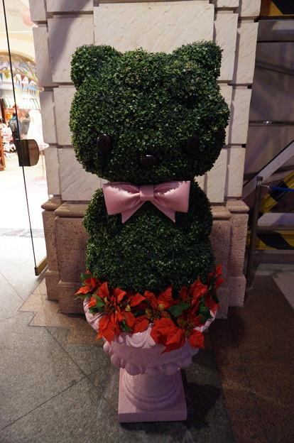 キティちゃんの盆栽