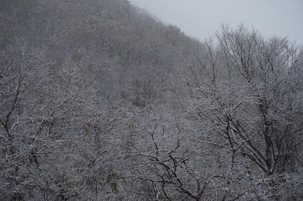 ベランダから雪を拝む