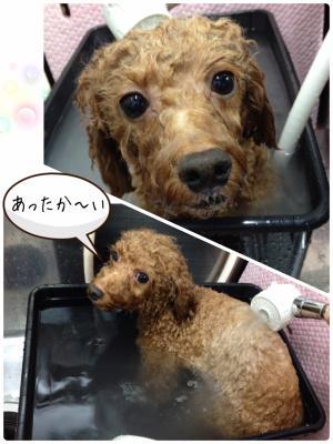 ら_convert_20161118223648