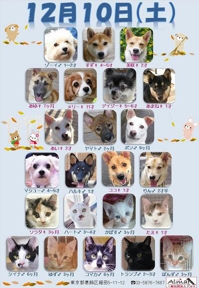ALMA ティアハイム 12月10日 参加犬猫一覧