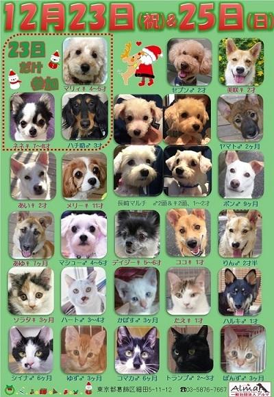 ALMA ティアハイム 12月23日25日 参加犬猫一覧