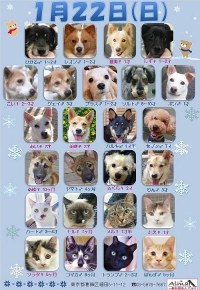 ALMA ティアハイム 1月22日 参加犬猫一覧