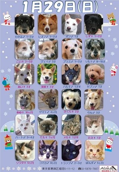 ALMA ティアハイム 1月29日 参加犬猫一覧