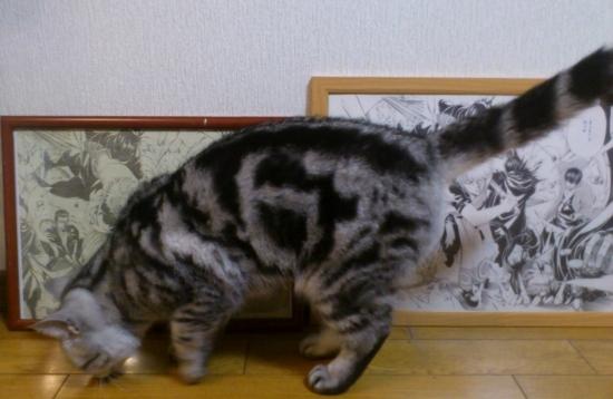 猫 銀魂 複製原稿