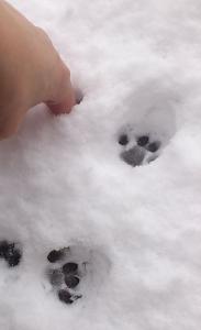 猫 肉球 雪