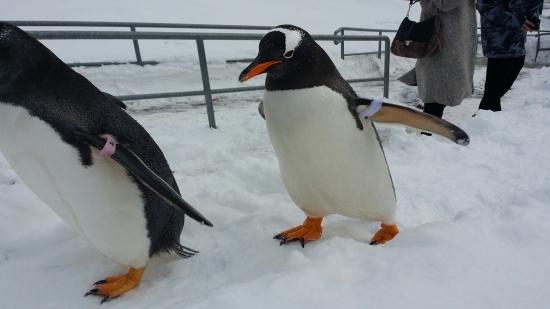 ペンギン 雪中散歩