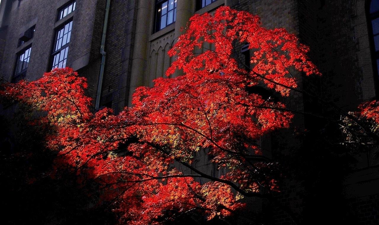 三田の紅葉(1)