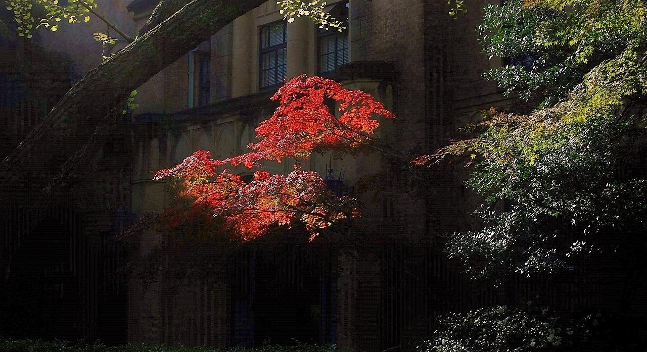 三田の紅葉(2)