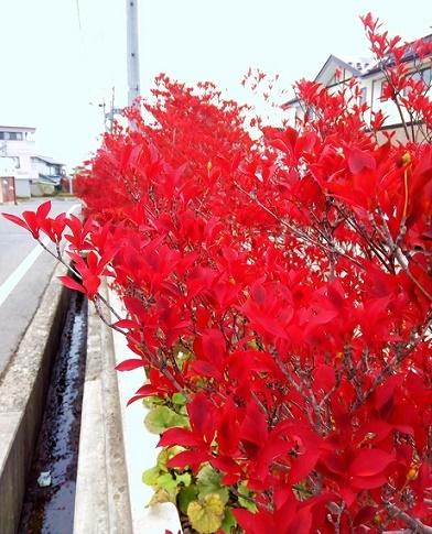 花束を君に (2)