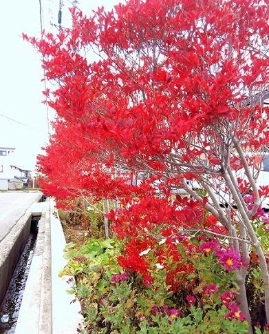 花束を君に (3)