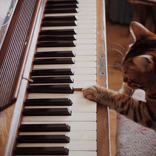 pp_pianocat.jpg