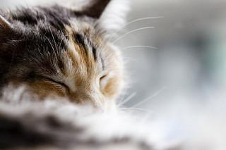 pp_sleepingcat.jpg