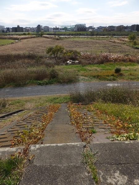 砧下浄水所裏多摩川河川敷