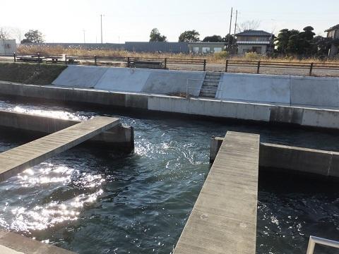 武蔵水路・水路中央の隔壁