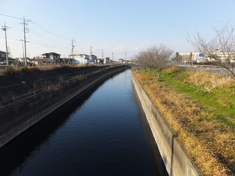 荒木橋より見沼代用水路上流を望む