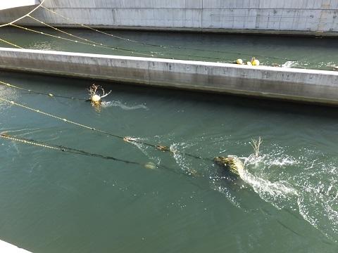 武蔵水路のロープと水球