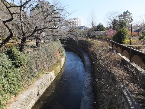 下田橋より妙正寺川下流を望む