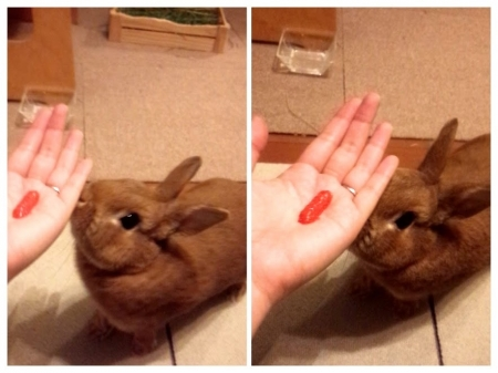 イチゴ大好きうさぎまおちゃん