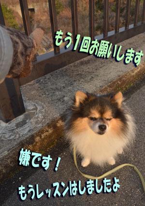 DSC_7432_201701221919311c0.jpg