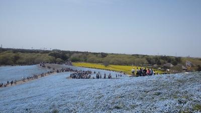 2014 427 ひたち海浜公園 (17)