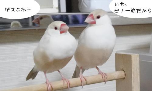ネットで拾った鳥ばなし_1