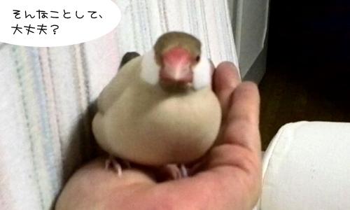 ネットで拾った鳥ばなし_2