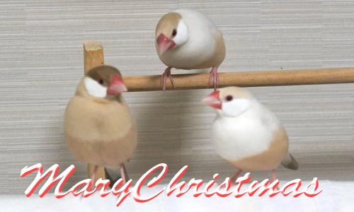ちゃちゃのクリスマスツリー_3
