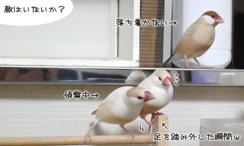 どうぶつ王国&愚痴w_5