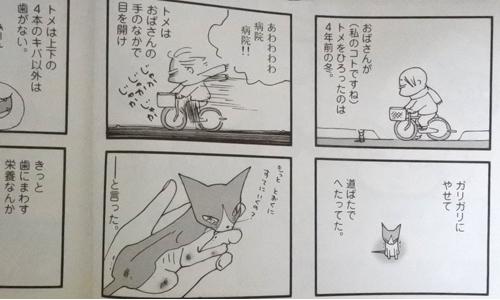 すぴすぴ便り&ネコマンガ_2